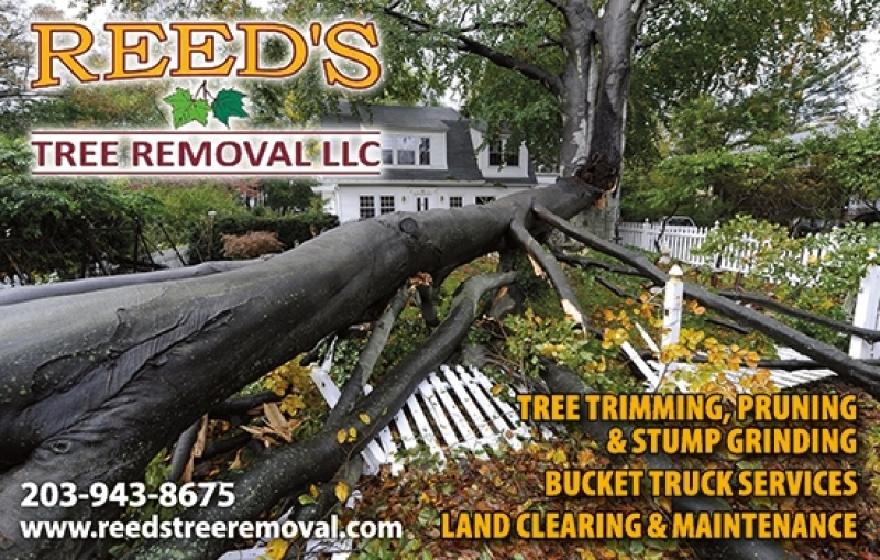 Reed's Tree Removal